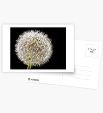 Shhmoking Dandelion Postcards