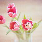 ~tulip love by TeresaMurphy