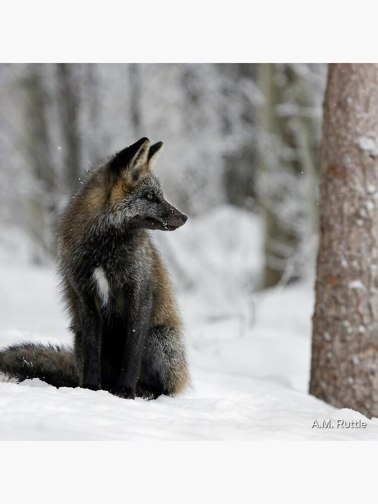 Silver Fox in Snow by annruttle