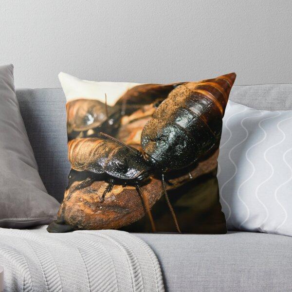 Madagascar Hissing Cockroach Throw Pillow