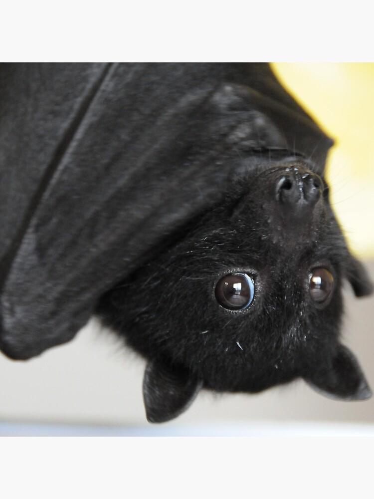 Australian Infant Black Fruit Bat von ivanwillsau