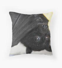 Australian Infant Black Fruit Bat Dekokissen