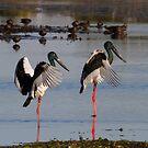 Pond Ballet by byronbackyard
