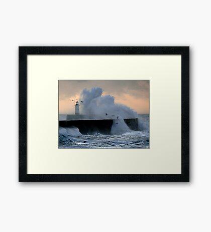 Gulls & Gales Framed Print