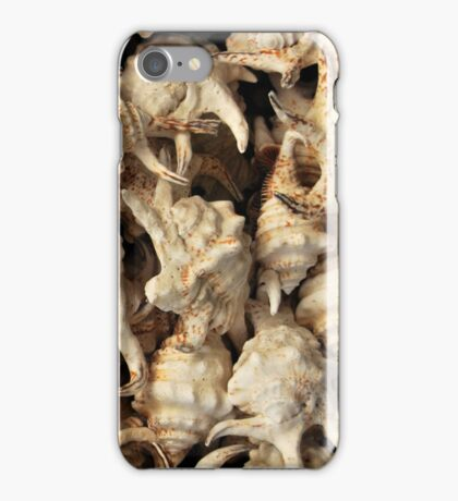 Spider conch shells iPhone Case/Skin
