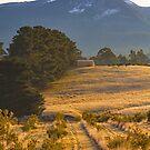 Early Morning, Mountain River, Tasmania #2 by Chris Cobern