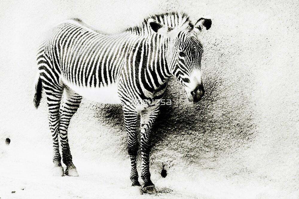 Zebra by zzsuzsa