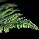 Frond of Autumn Light by ChromaticTouch