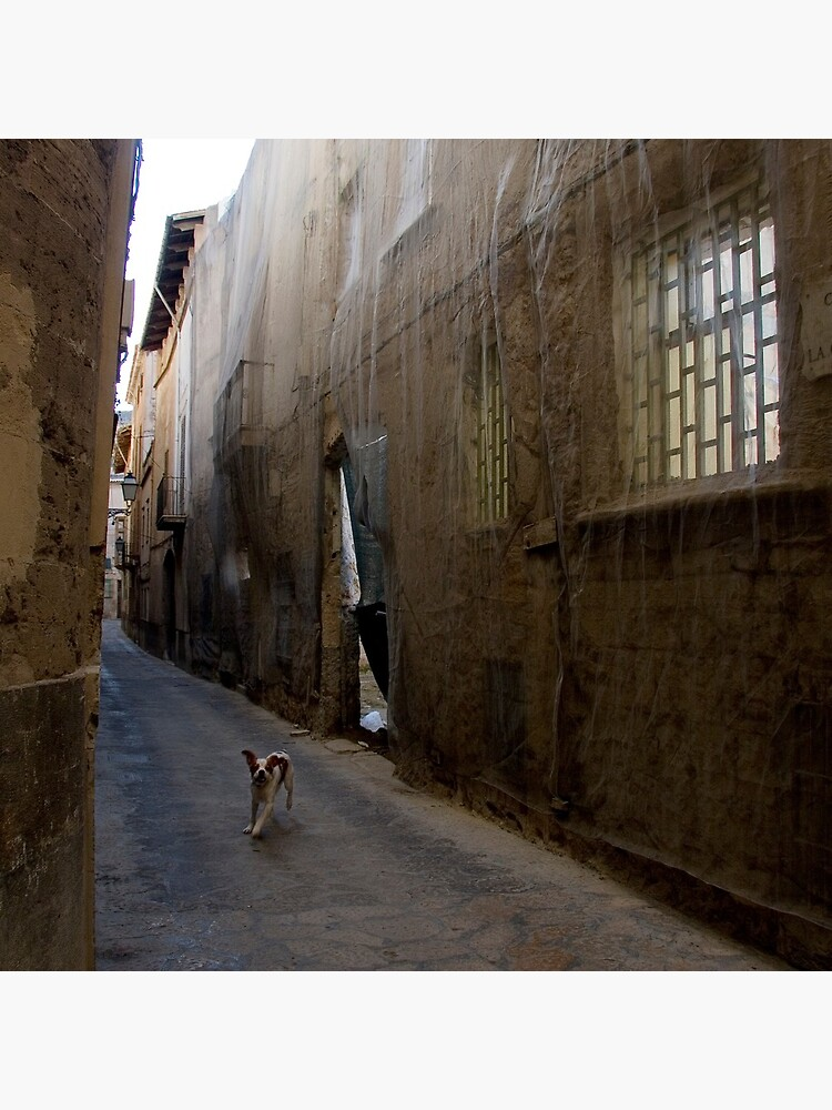 Dog Street by rogues70