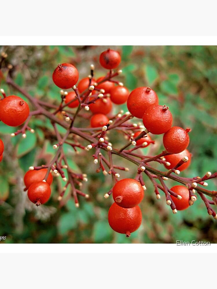 Winter Berries by ellcot