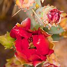 Red Cactus Flower by Terry Runion