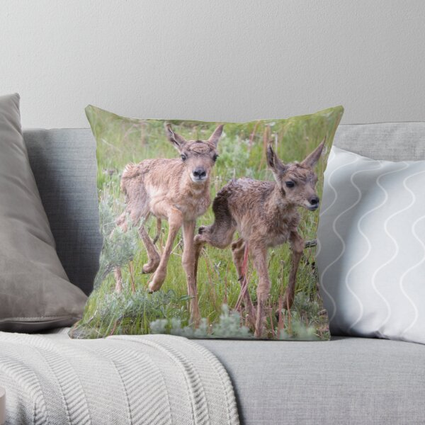 Pronghorn Twins Romping Throw Pillow