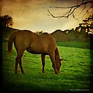 The Green, Green Grass of Home... by Laura Palazzolo