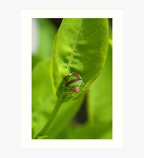 """""""I'm a Stink Bug, What are You?"""" Art Print"""