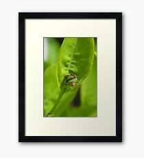 """I'm a Stink Bug, What are You?"" Framed Print"