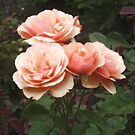 Orange Roses by Bernadette Claffey