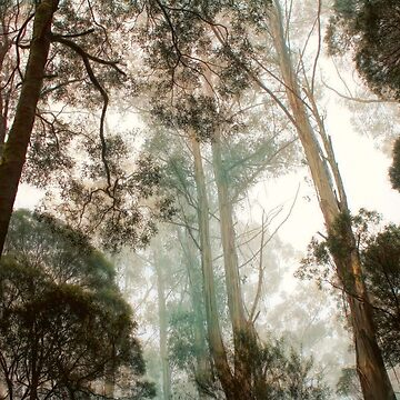 Trees by DVJPhotography