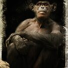 Dignity- an old chimp at the LA Zoo by zzsuzsa