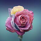 Unique Rose by thed4rkestrose