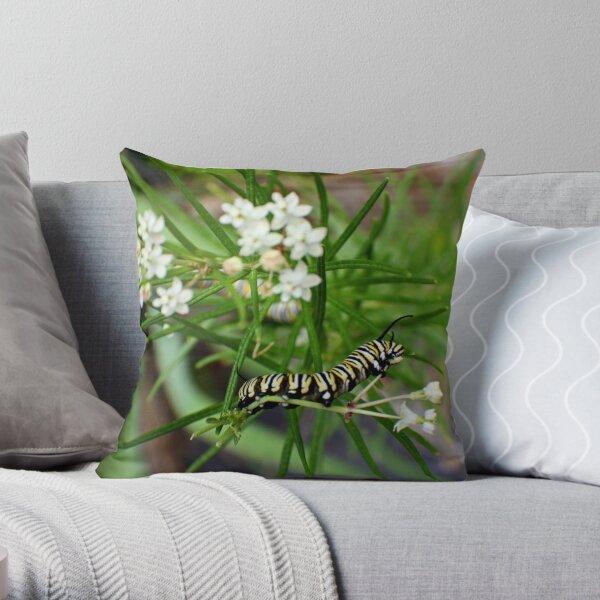 Monarch Caterpillar - 11 Throw Pillow