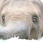 The Little Elephant with the big ears by Olivia Plasencia