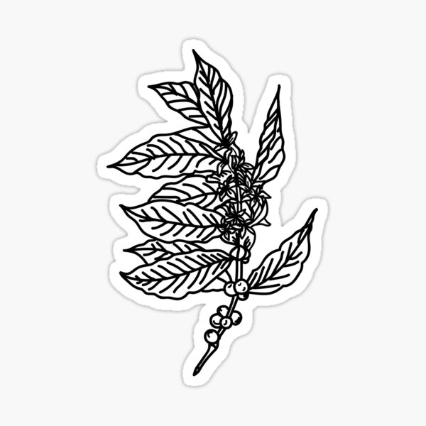 Coffee Plant Sticker