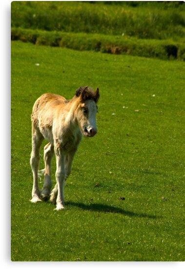 Foal   by Trevor Kersley