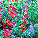 Wild Flowers in the Chuska Mts, AZ by F.  Kevin  Wynkoop