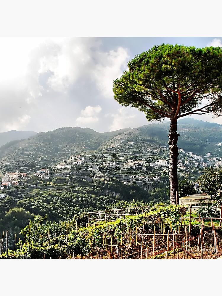 Vineyard in Ravello by andreisky