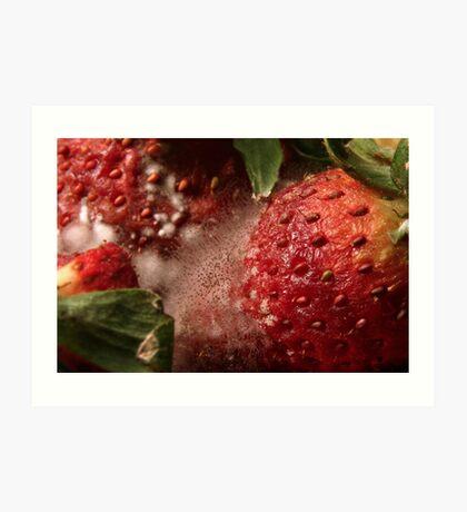 Rotting fruit strawberries Art Print