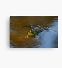 Frog Relaxing Canvas Print