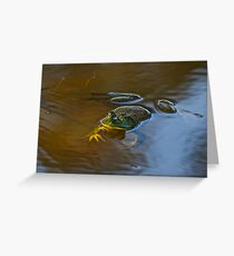 Frog Relaxing Greeting Card