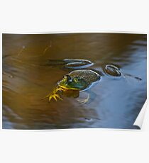 Frog Relaxing Poster