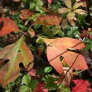 Leaves of Autumn by teresa731