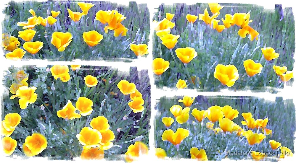 Yellow poppies collage by Madalena Lobao-Tello
