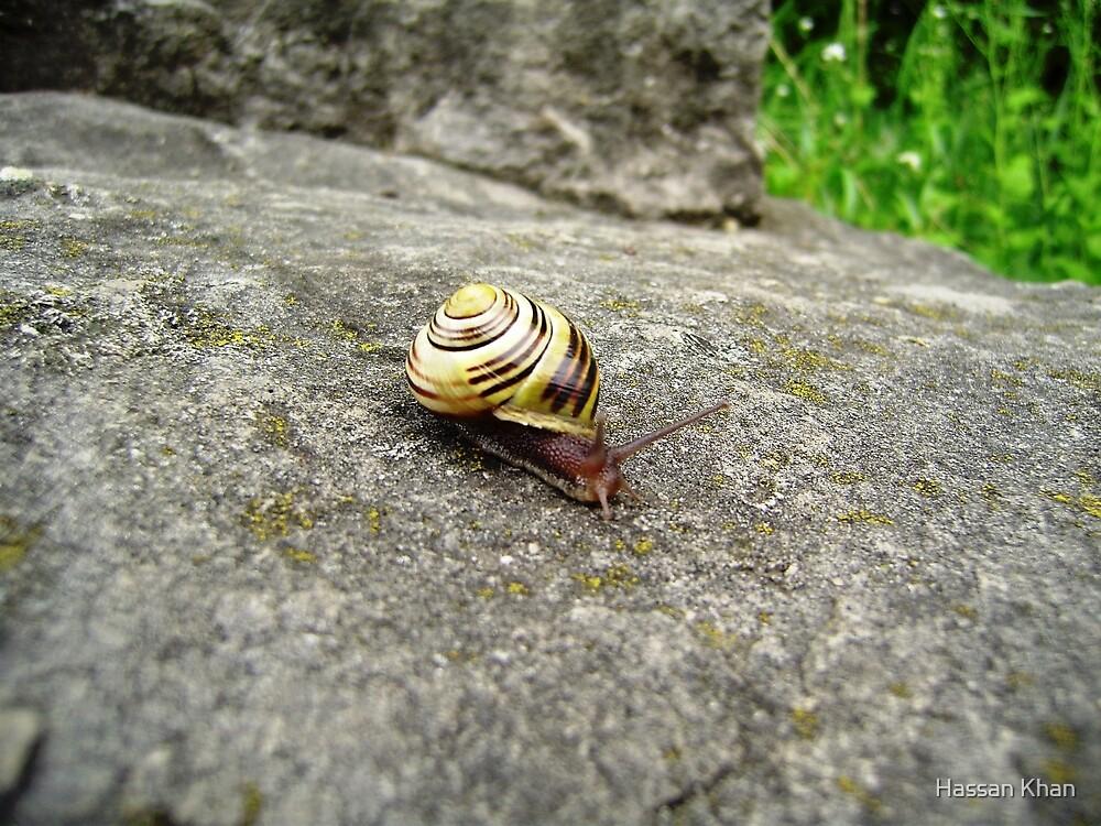 Mr. Snail by Hassan Khan