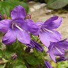 Splash of Purple by sarnia2