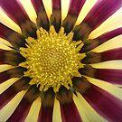 Flower - Stripes up close by shiro
