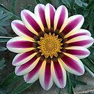 Flower stripes again by shiro