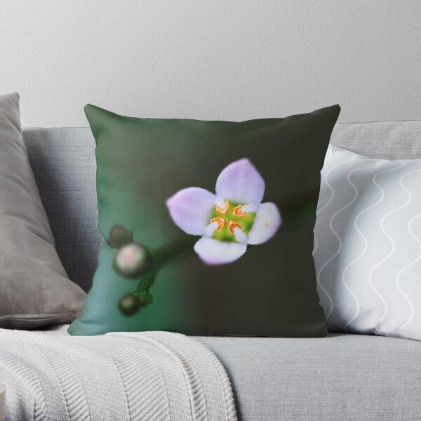Zieria smithii Throw Pillow