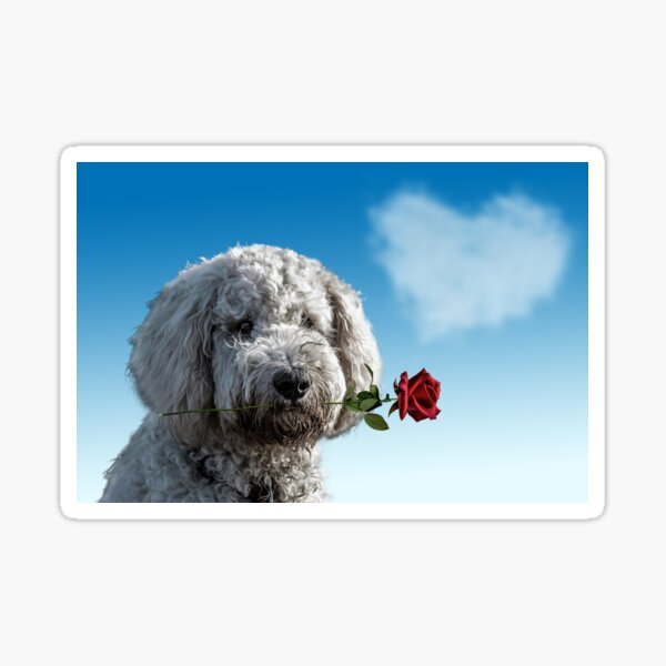 MY BICHON FRISE NOSE ART DIRTY WINDOW DOG STICKER