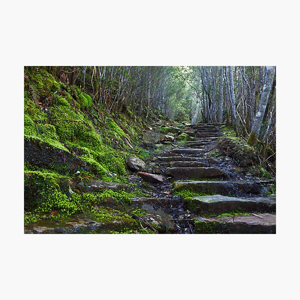 Walking Track, Mount Wellington Tasmania Photographic Print