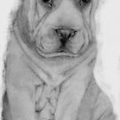 Sharpe Pup by Amber Witt