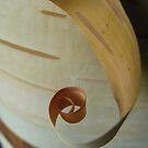 Birch Curl by shiro