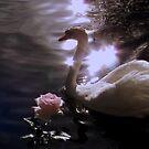 When Swan Meets Rose by Brian Bo Mei