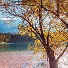 Buntes Herbstlaub am alpinen See von zakaz86