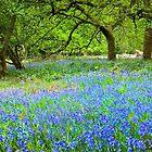 Frühling in den Cotswolds von Viv Thompson