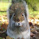 Squirrel Feeding by shiro