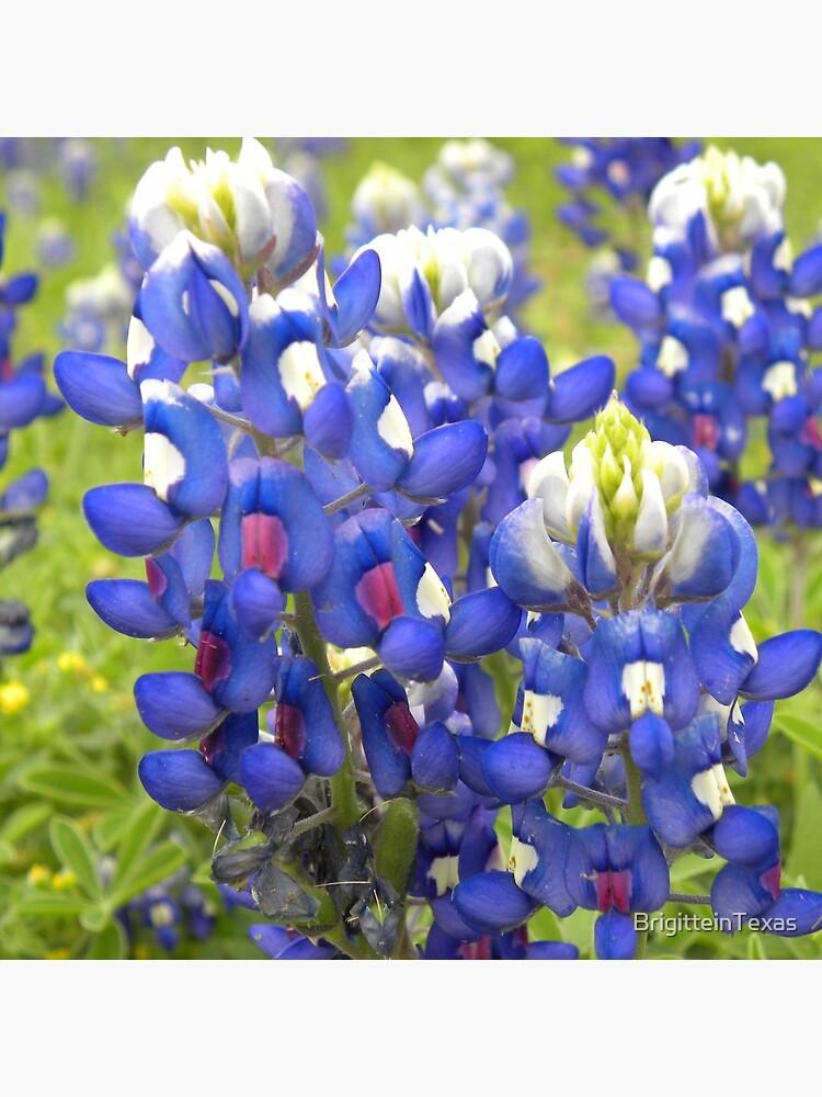 Texas State Flower Bluebonnet Tote Bag By Brigitteintexas Redbubble