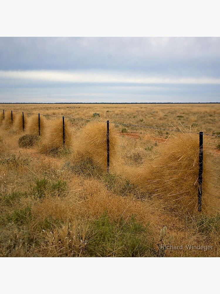 Grass along the fence line, Outback, NSW by RICHARDW